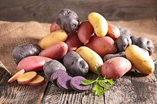 Simply S-E-E-D - 10 Piece Na El Paso Mall Mix Fingerling New item Potato