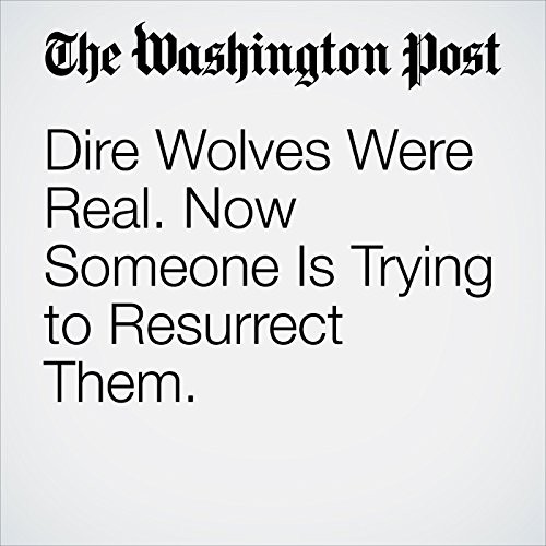 Dire Wolves Were Real. Now Someone Is Trying to Resurrect Them. copertina