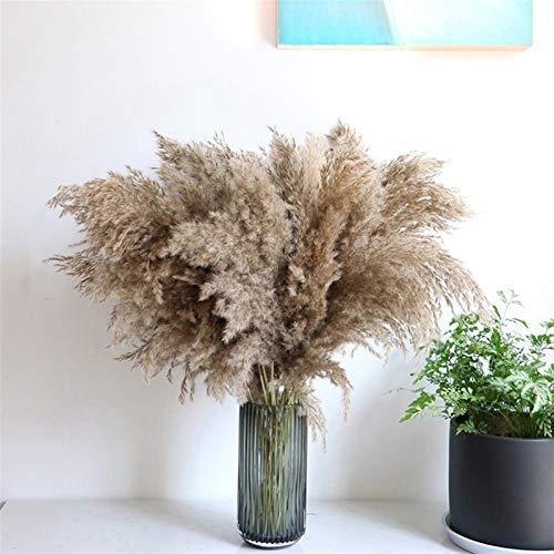 xinmeng Grasdekor Pflanzen Wohnkultur Hochzeit Trockene Blumen Blumenstrauß Blumen Feder Phragmiten Natürlich hoch (Size : 20PCS)
