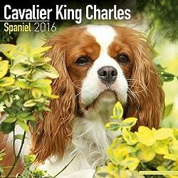 Cavalier King Charles Spaniel Calendar 2016 (Square)[Avonside Publishing Ltd.][Amazon]