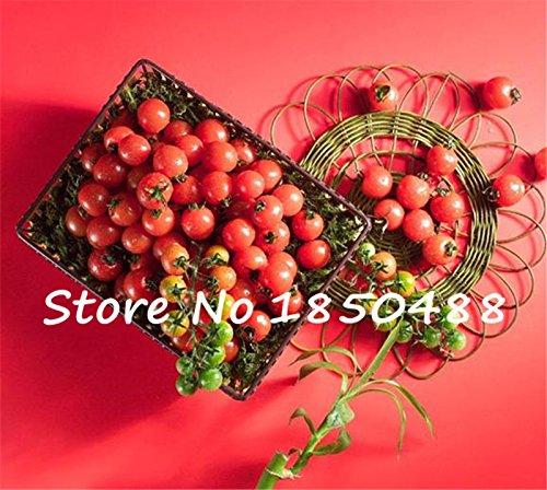 100 graines Bonsai Tomate Cerise Mini pot doux fruits légumes frais bio
