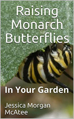 Raising Monarch Butterflies: In Your Garden