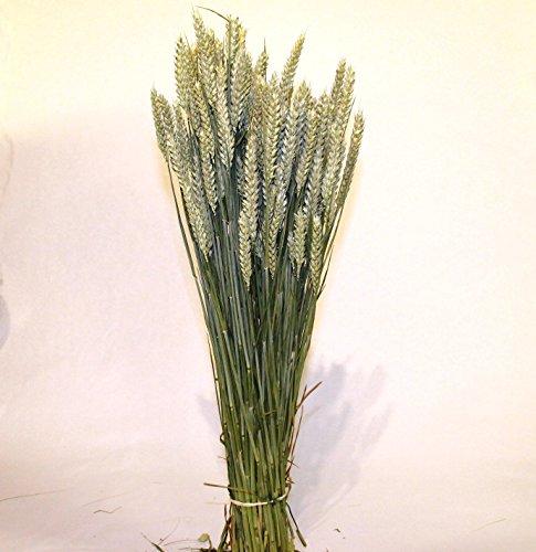 Getrocknete Weizen Strauß
