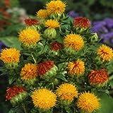 Fresh 100 semi - semi di cartamo Fiore arancione