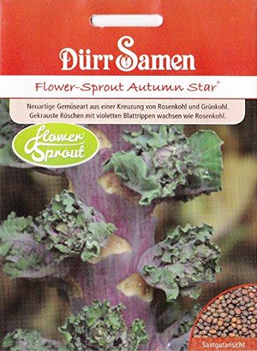 Flower-Sprout, Brassica oleracea var. Gemminfera, ca. 20 Samen