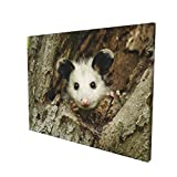 Cute Possum in A Tree Hole Wall Art Paintings Living Room Decor Canvas Prints Wooden Frame for Bedroom Office Home Decorations