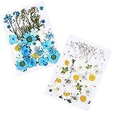 Fiyuer 2 pcs flor prensada flores secas naturales para decoracion manualidades...