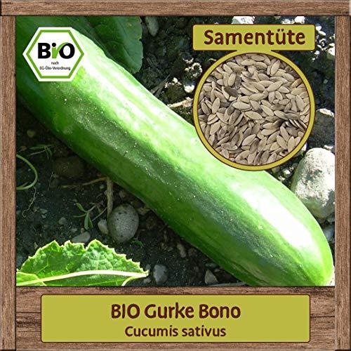 BIO Gurke Samen Sorte Bono (Cucumis sativus) Gemüsesamen Gurke Saatgut