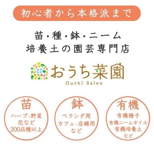 ハーブ【苗】6種セット/9cmポット/ハーブオイル/ハーブビネガー/シーズニング用