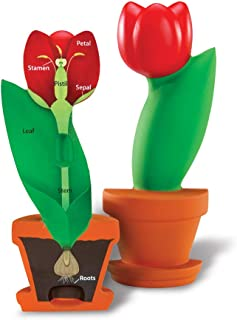 Learning Resources Cross-Section Flower Model, Classroom Foam Demonstration Model, Teaching Aids, 2 Piece Model, Grades 2+, Ages 7+