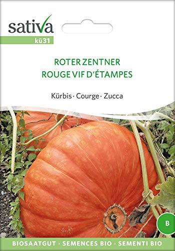 Sativa Rheinau kü31 Kürbis Roter Zentner (Bio-Kürbissamen)