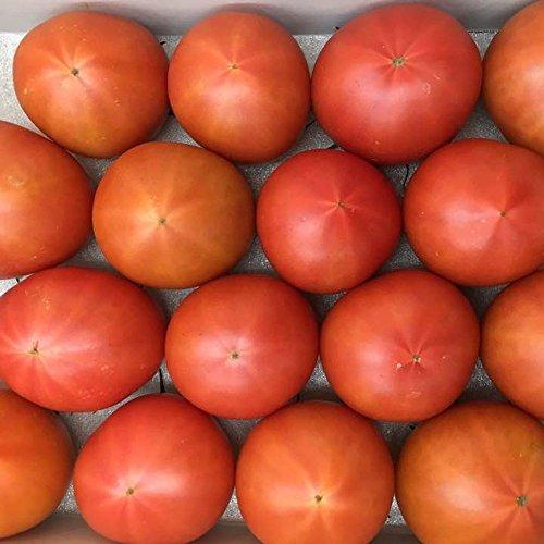 フルーツトマトぐんま産 糖度11度以上ブリックスナイン