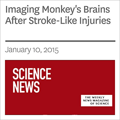 Imaging Monkey's Brains After Stroke-Like Injuries audiobook cover art