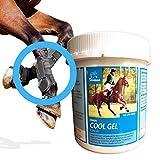 EMMA® Gel naturale del cavallo a base di Arnica I cura e unguento per le gambe, balsamo per cavalli fresco e per la pelle, per le regioni particolarmente stressate come gambe, spalle o schiena 1000 ml