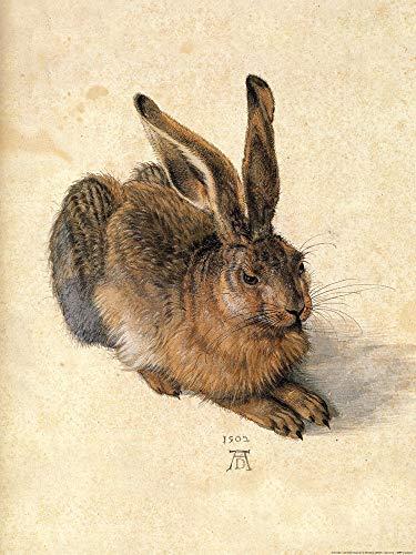 1art1 Albrecht Dürer - Junger Feldhase, 1502 Poster Kunstdruck 80 x 60 cm