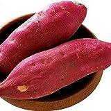 TOYHEART Semi Di Ortaggi Premium 20 Pezzi, Semi Di Patate Dolci Semi Rustici Facili Da Produrre Semi Di Piante Domestiche Fresche Per Giardino Semi di patata dolce