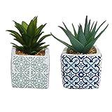 Vidal Regalos Maceta con Cactus x2 Modelos 17 cm