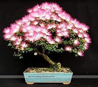 Bonsai Tree Albizia julibrissin Rare Flowers in Bonsai 30 Seeds/Pack Indoor Pink