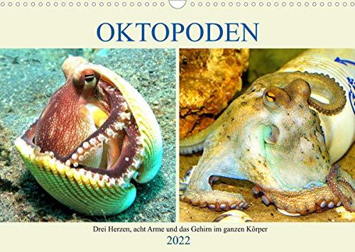 Oktopoden. Drei Herzen, acht Arme und das Gehirn im ganzen Körper (Wandkalender 2022 DIN A3 quer)