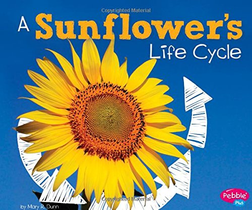 A Sunflower's Life Cycle (Explore Life Cycles)
