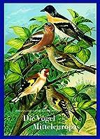 """Johann Friedrich Naumann - Die Voegel Mitteleuropas: Naturgeschichte der Voegel. Vorzugsausgabe mit Fine Art Print """"Waldrapp"""""""