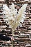 NaturalNH Hierba de Pampas secada, grande, apenas 100 cm de largo, hierba de Pampa, color beige, esponjosa, decoración bohemia (color natural grande, 3 unidades)