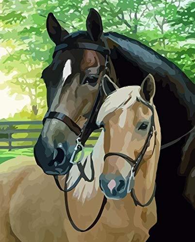 DIY olieverfschilderij door nummers Animal Acryl Verf Unframe Kleurplaten door nummers Canvas Paard voor volwassenen Handgeschilderd Gift 40X50cmNoFrame Tdgg3500