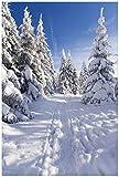 Wallario Poster - Wanderweg im Schnee in Premiumqualität,
