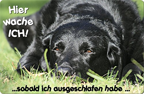 +++ LABRADOR Retriever - Metall WARNSCHILD Schild Hundeschild Sign - LAB 31 T15 S