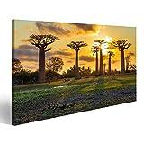 bilderfelix® Bild auf Leinwand Schöne Baobabbäume bei