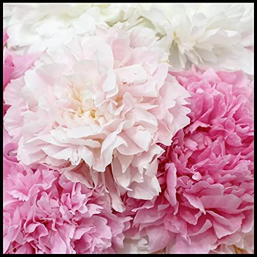 Bulbos De Peonía,Mundialmente Famoso,Hacer Feliz A La Gente,Se Puede Regalar A Amigos,Exquisitas Flores Cortadas-5 Bulbos
