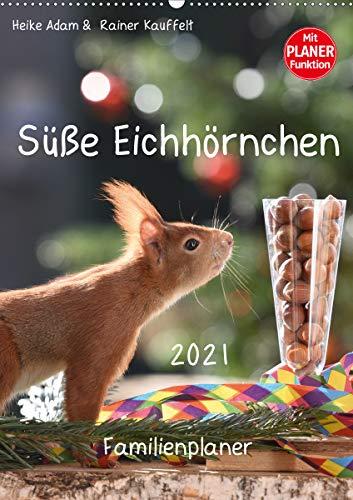 Süße Eichhörnchen (Wandkalender 2021 DIN A2 hoch)