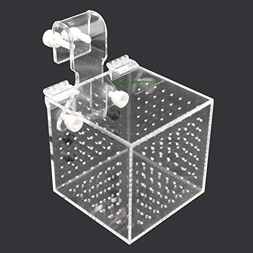 Aquarium Isolationsbox/Quarantänebox, Ablaichkasten, Aufzuchtkasten, Box für Korallenableger, 10x10x10 cm
