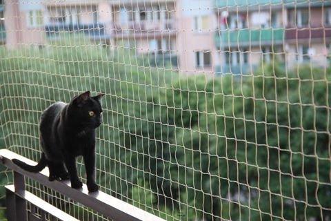 Bird-Tech Balkonnetz für Katzen und Vögel, Farbe: Stein, inkl. 50 Befestigungsklammern + 1 x 80-ml-Tube Silikon