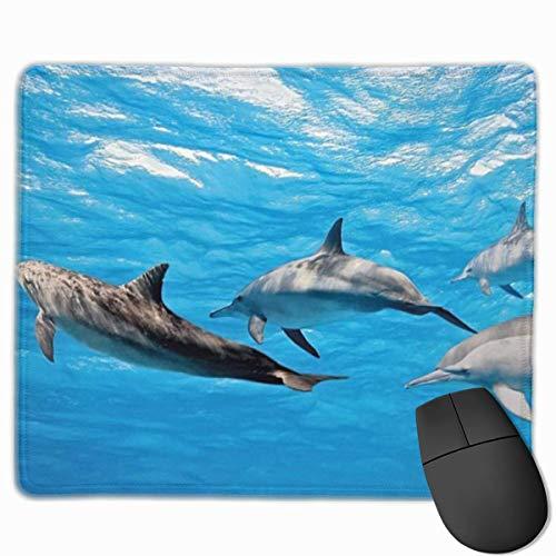 NiedlichGaming-Mauspad, Schreibtisch-Mauspad, kleine Mauspads für Laptop-Computer, Mausmatte Delphin-Unterwasserfotografie von Delfinen, die glücklich schwimmen Ozean Tierleben Bilddruck Blau Grau