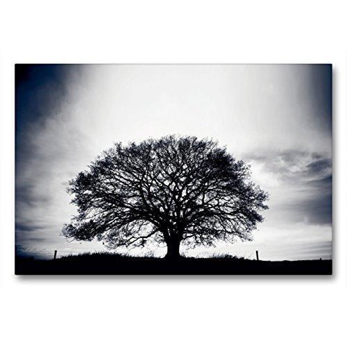 CALVENDO Premium Textil-Leinwand 90 x 60 cm Quer-Format März: Die ersten Frühlingsstürme toben über das Land & künden vom nahen Frühling, Leinwanddruck von Ingo Gerlach