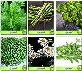ferry semi di crescita elevati solo non impianti: seme facile da coltivare semi combo, asparagi, limone basilico, crescione, tedesco chamoe, semi combo pack per seme (1 per pacchetto)