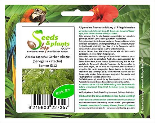 Stk - 30x Acacia catechu Gerber Akazie (Senegalia catechu) Samen ID12 - Seeds Plants Shop Samenbank Pfullingen Patrik Ipsa