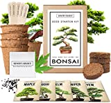 tan colored box with picture of bonsai on outside, several pots and seeds for bonsai growing kit