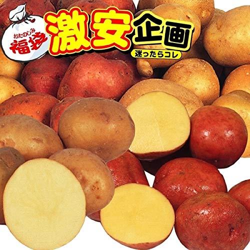 国華園 ジャガイモ種芋 じゃがいも福袋 5種5kg 21年春商品