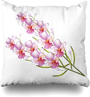 Best pink singapore orchids Reviews