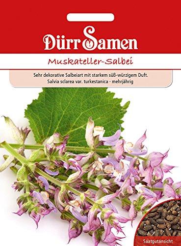 Dürr Samen 4366 Muskateller-Salbei (Muskatsamen)