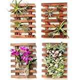 Wall Planter – 4 Pack Wooden Hanging Planter for Indoor Plants, Air Plant Succulent Holder, Live Vertical Garden. Wall Mounted Plant Stand, Large Wall Decor for Christmas Decorations Xmas Outdoor