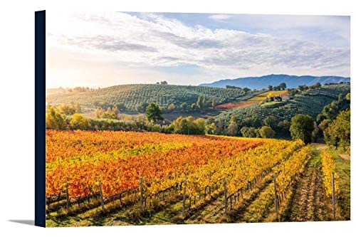 Umbria, Italy - Photo of Vineyards in Autumn 9024610 (18x12 Gallery Wrapped Stretched Canvas)