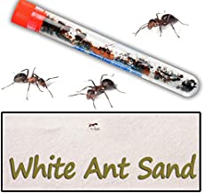 Best do pet stores sell ants Reviews