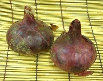 西日本産 自然農法 赤玉ねぎ 約300g ※5個セット ※常温