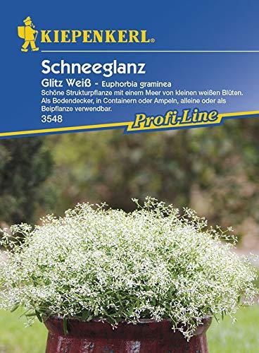 Blumensamen - Schneeglanz Glitz Weiß von Kiepenkerl