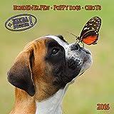 Puppy Dogs/Hundewelpen 2022: Kalender 2022 (Artwork Media)