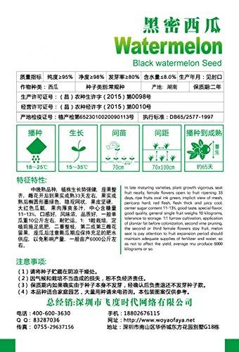 Les semences de la fruits de mangostán, riche en Nutrientes Reine des fruits tropicaux – 10 Pcs/lot