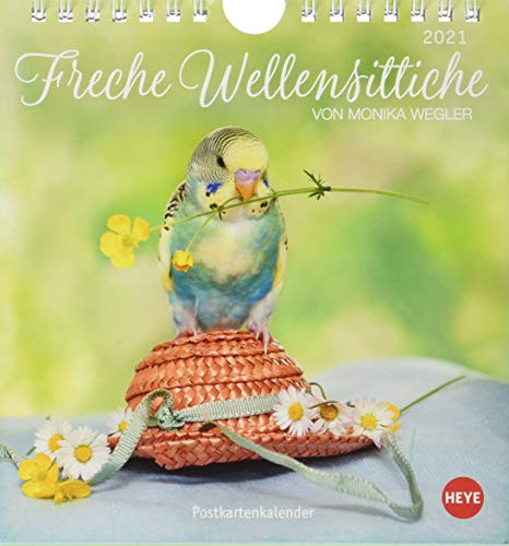 Freche Wellensittiche Postkartenkalender 2021 von Monika Wegler - Kalender mit perforierten Postkarten - zum Aufstellen und Aufhängen - mit Monatskalendarium - Format 16 x 17 cm